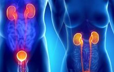 Que son las enfermedades urológicas?
